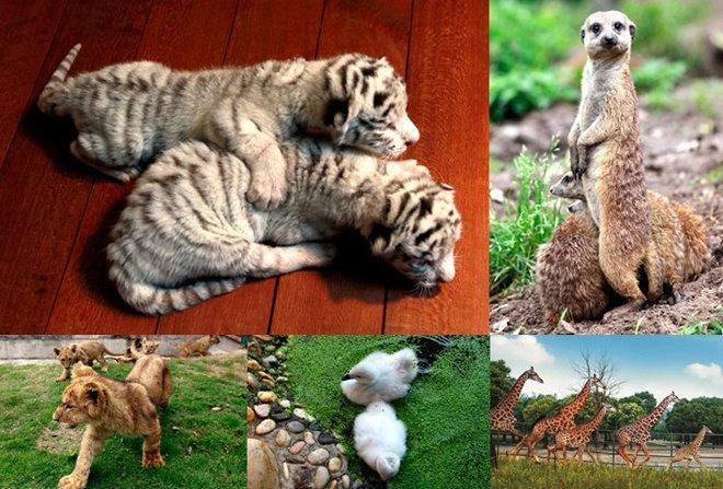 【萌物成长记】野生动物园里的小动物们