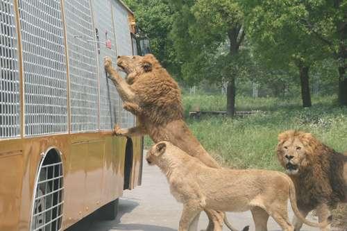 上海野生动物园观光写游记得大奖