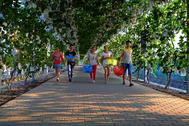 """上海""""后花园""""里瓜果香 金山探索都市农业发展新路径"""