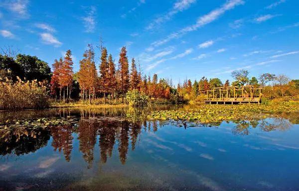 上海滨江森林公园湿生植物观赏区