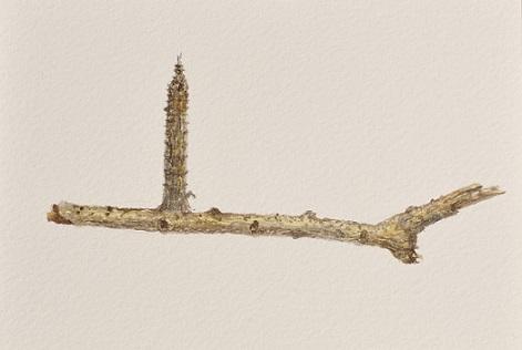 何振浩说,哪怕枯萎的树枝也饱含了生命的力度,我画它们,怀着敬意和