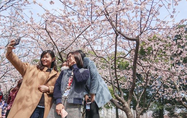 上海静安雕塑公园春花烂漫 市民踏春赏花乐不停