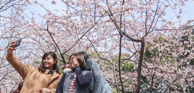 上海市民踏春赏花乐不停