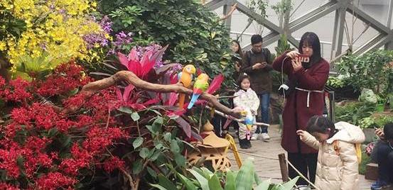 珍稀兰花漂洋过海 2018上海国际兰展周五开幕