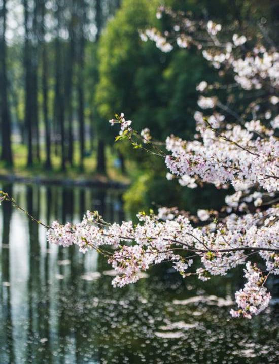 第17届都市森林百花展将在沪举行
