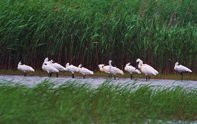 上海崇明:做长江经济带生态大保护的标杆