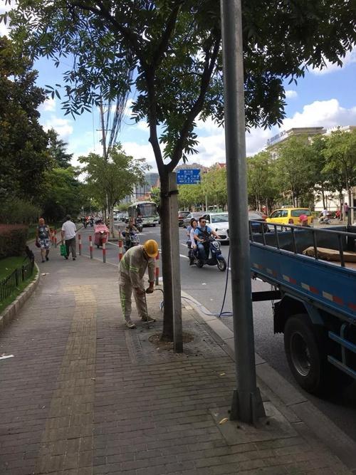 """近千位""""管家"""",呵护出上海马路边的别样风景"""