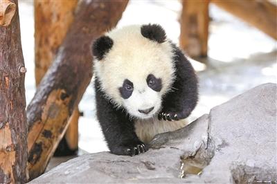 """上海野生动物园""""萌宝""""来贺春"""