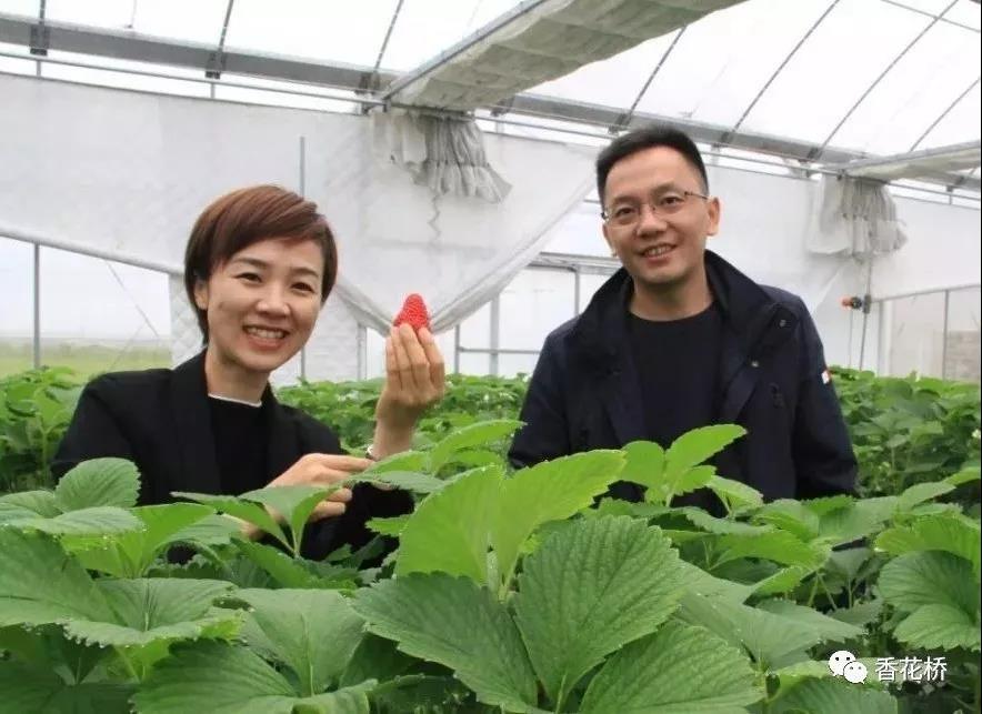"""水果蔬菜长在空中?青浦小伙建起了""""梦想中的蔬果园"""""""