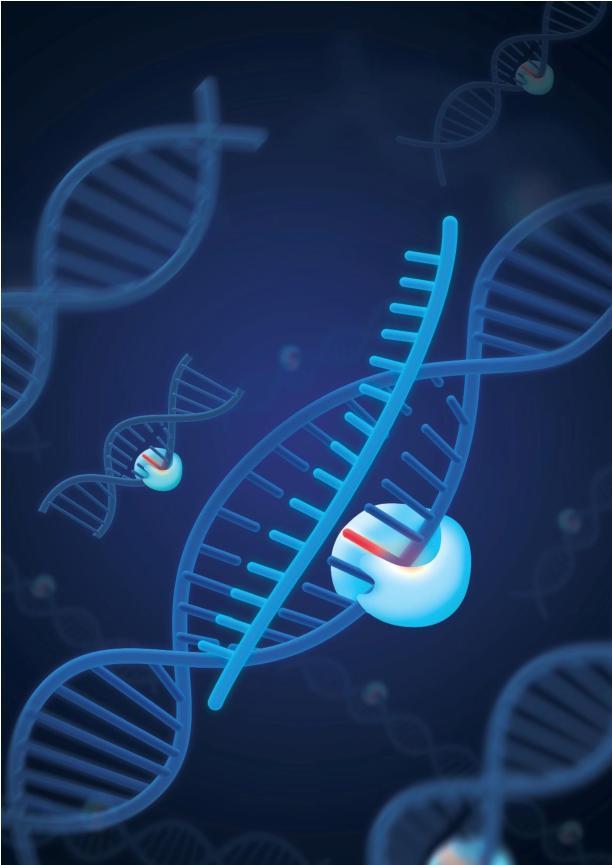 我科学家发现新一代无脱靶基因编辑工具