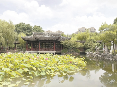 """今年荷花睡莲展很""""喜庆"""""""