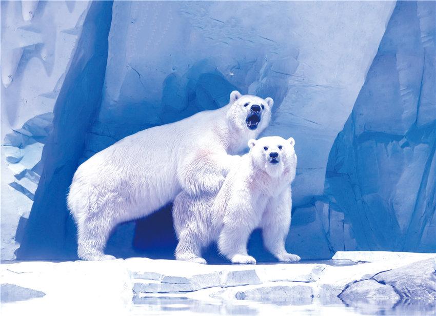 北极熊、帝企鹅、白鲸好久不见!上海海昌海洋公园室内场馆全面开放