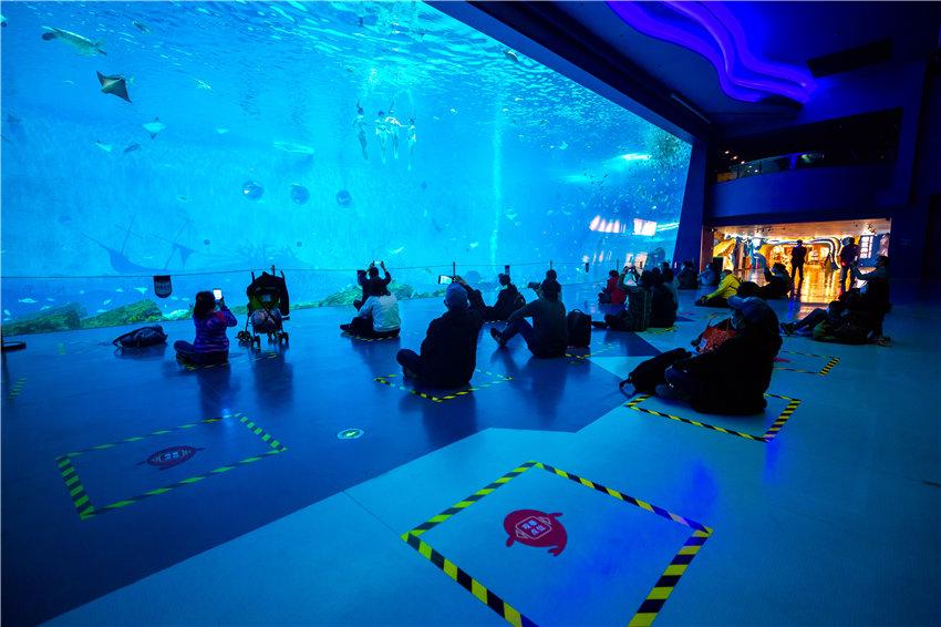 北极熊、帝企鹅、白鲸好久不见!上海海昌海洋公园室内场馆全面开放【5】