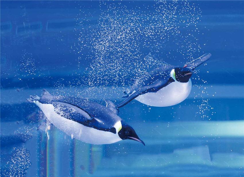 北极熊、帝企鹅、白鲸好久不见!上海海昌海洋公园室内场馆全面开放【2】