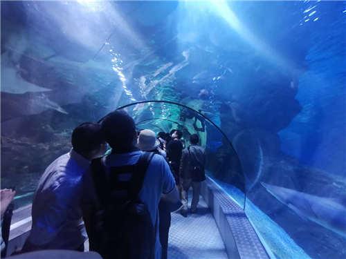 """海洋馆看鱼、搭个乐高……""""5.19中国旅游日""""""""玩转普陀"""""""
