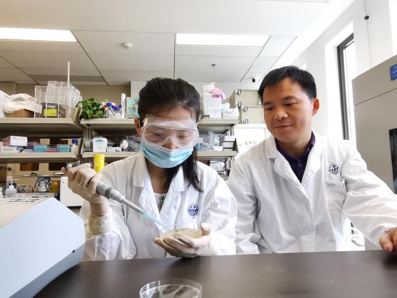 """精准操纵细菌""""智商""""上海仁济医院医学家在《先进材料》发表细菌移植新策略"""