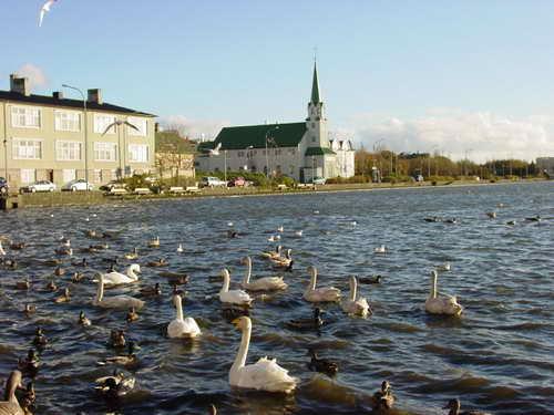 据说冰岛是野鸭子最多的国家