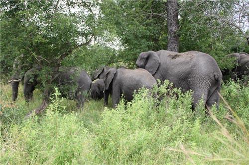 它是南非最大的野生动物保护区